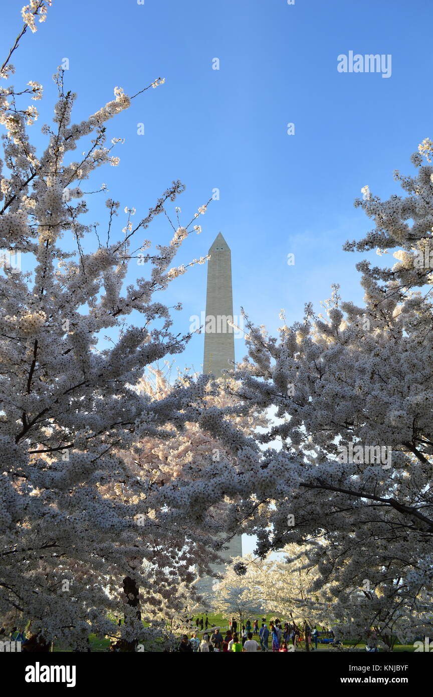 Washignton DC, Columbia, États-Unis - 11 Avril 2015 : Washington-DC-Monument-cherry-blossom Photo Stock