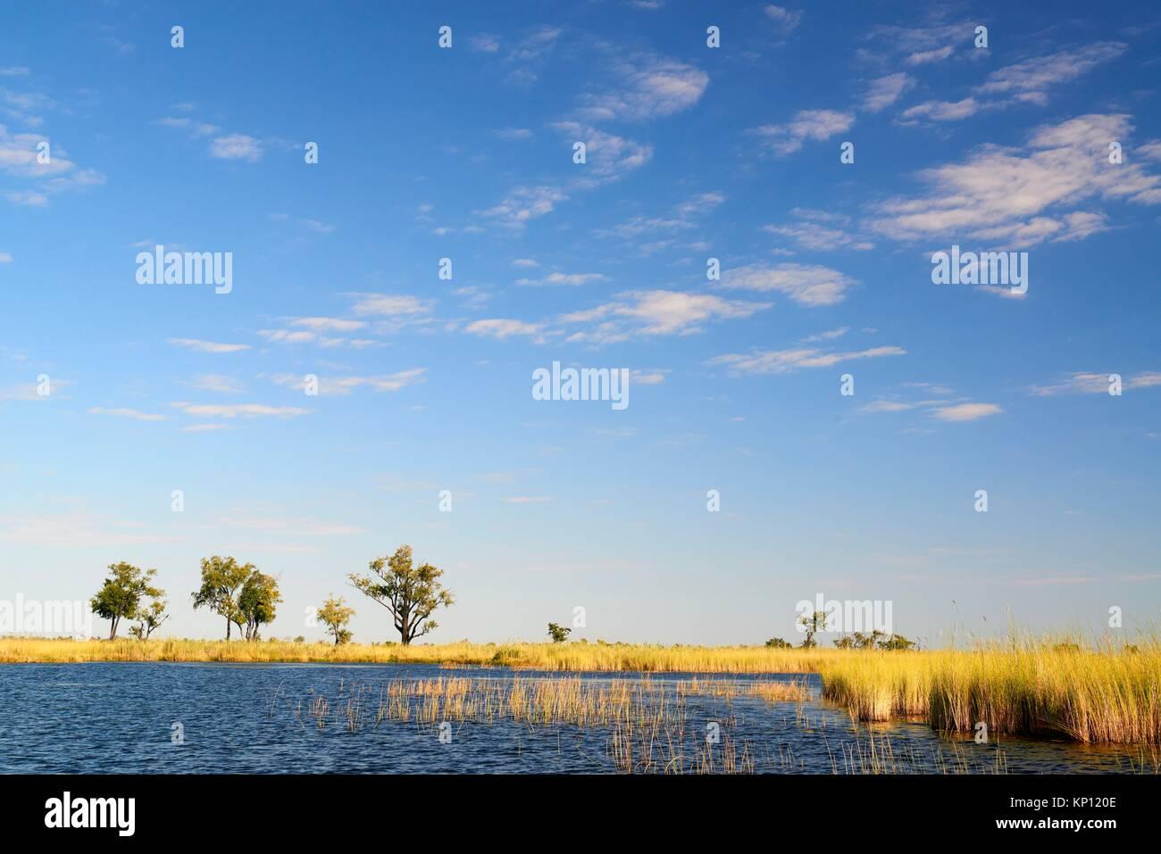 Paysage avec canal d'eau et l'herbe haute, le Parc National de Moremi, Okavango Delta, Botswana, Afrique Photo Stock