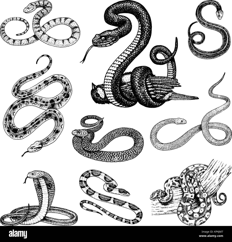 Viper Jeu Serpent Serpent Cobra Et Python Anaconda Ou Viper Royal