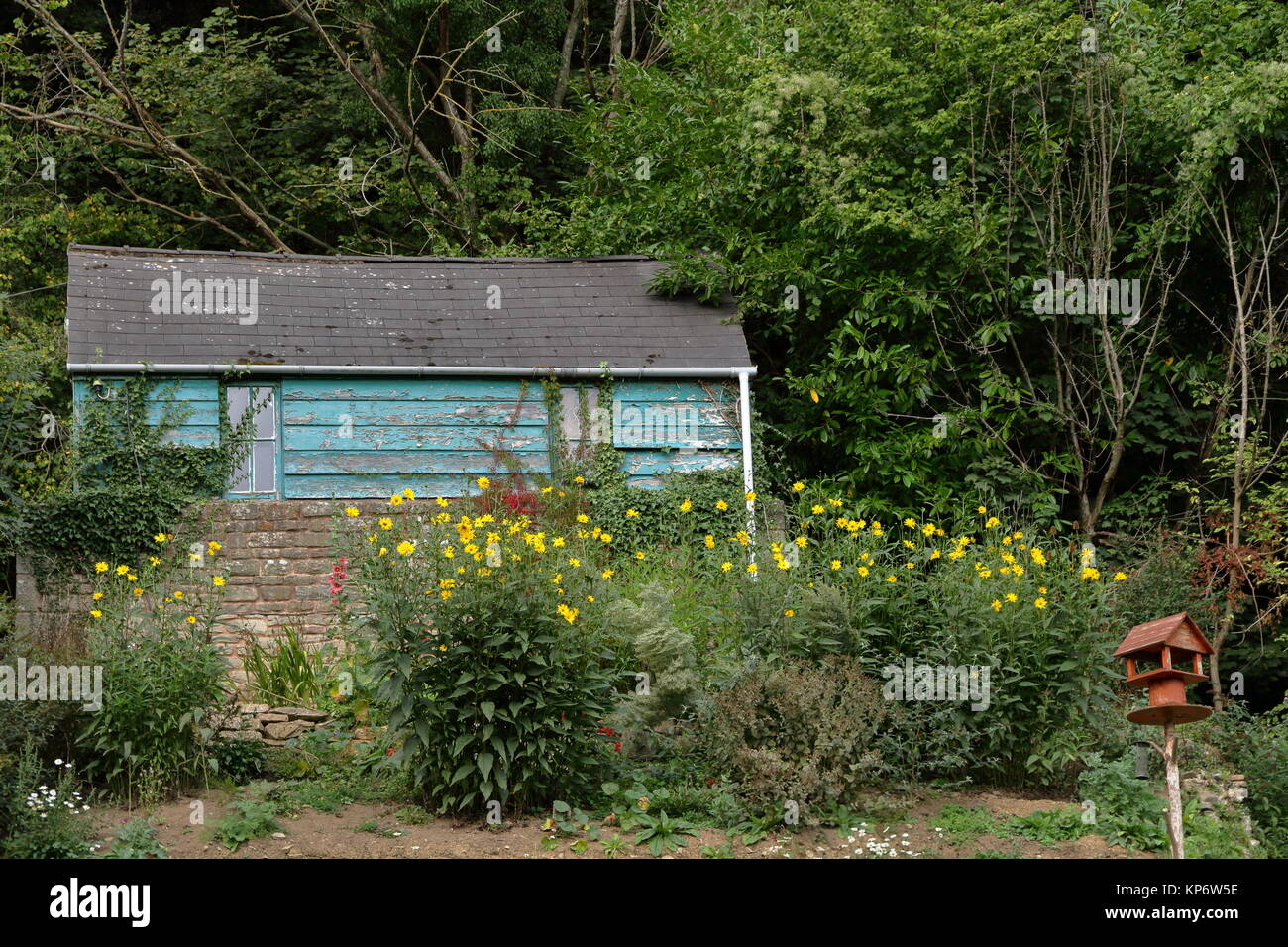 Peint bleu abri de jardin en bois avec table d\'oiseaux fait maison ...