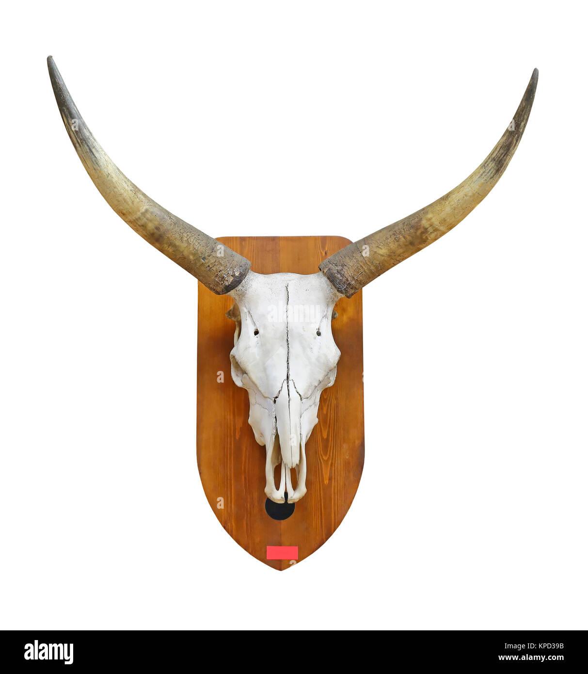 Crâne De Taureau Banque Dimages Photo Stock 168703735 Alamy