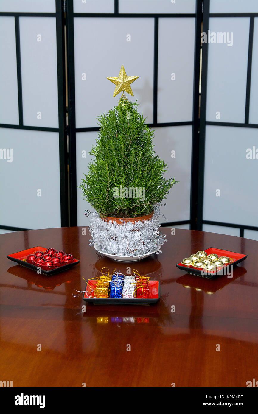 Rosemary Mini Arbre de Noël prêts pour décorations colorées en studio avec une étoile d'or Photo Stock