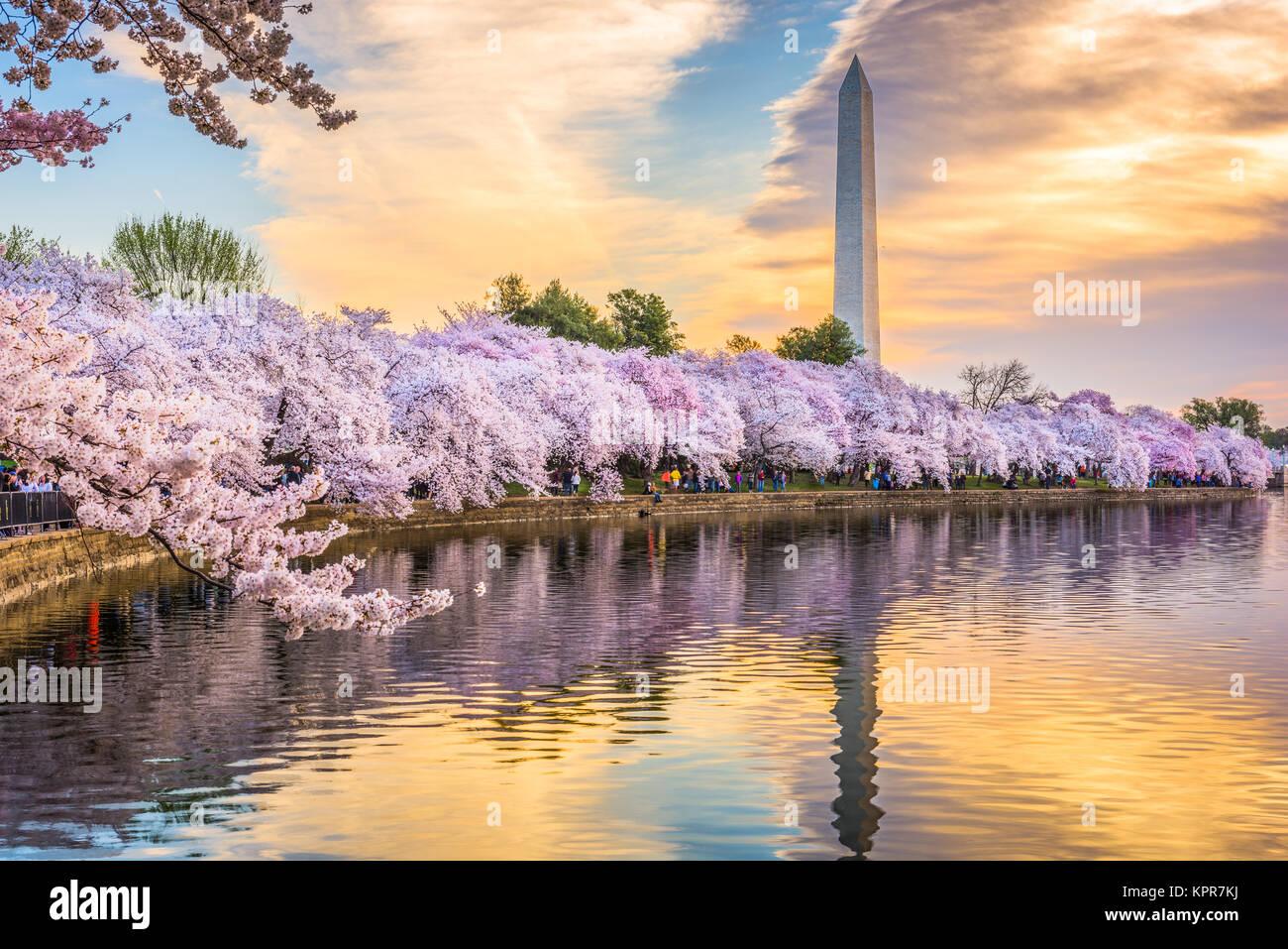 Washington DC, USA au bassin de marée avec le Washington Monument dans la saison du printemps. Photo Stock