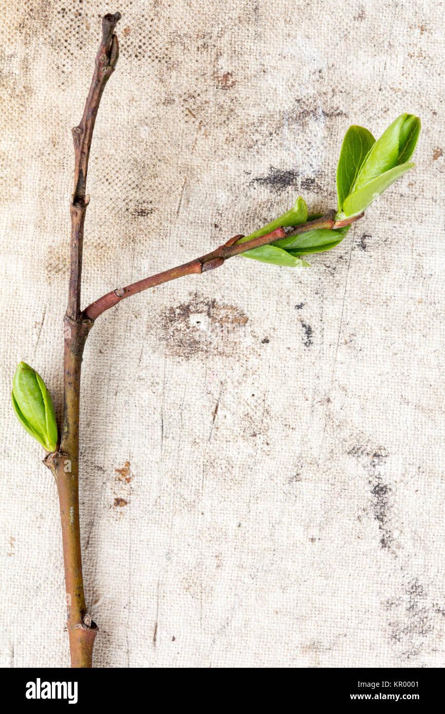 Jeune plante sur le vieux fond de toile banque d 39 images for Achat plante sur internet