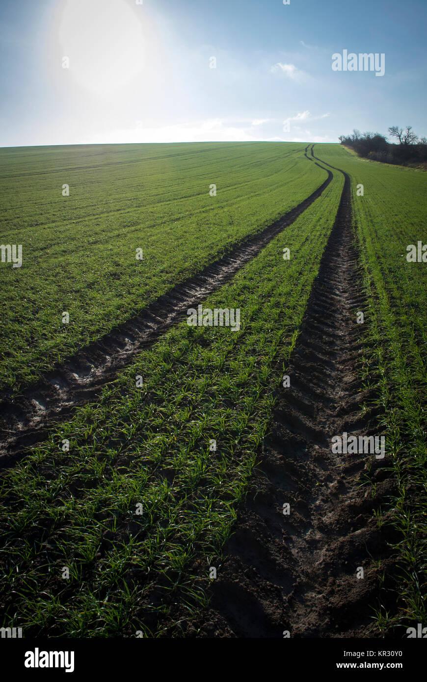 Tracés dans un champ les agriculteurs, Saxe-Anhalt, Allemagne Banque D'Images