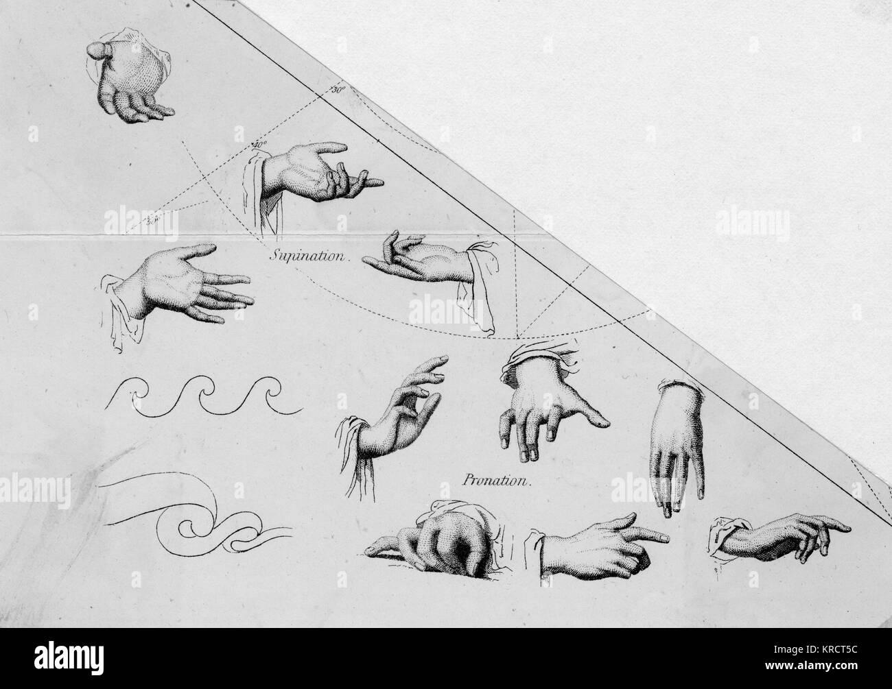 Un assortiment de mains dans différentes positions et gestes. Date: 19e siècle Banque D'Images