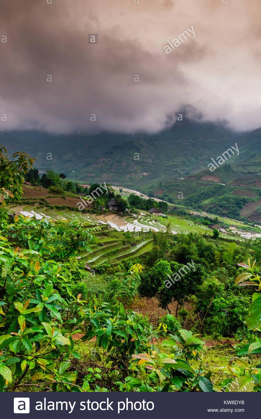Les rizières en terrasses, de la vallée de Muong Hoa, près de Sapa, Vietnam du Nord. Photo Stock