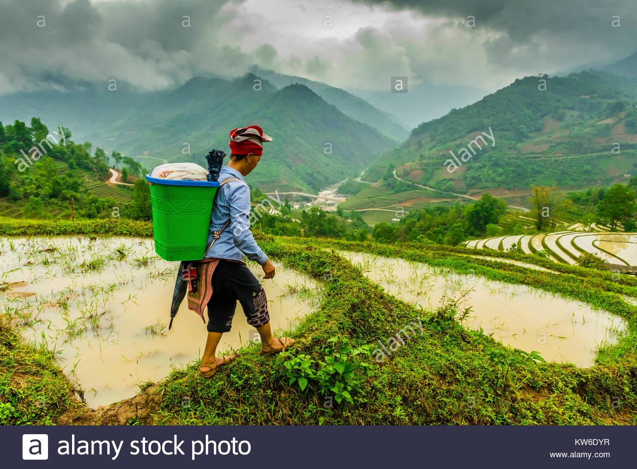 Dao rouge hill tribe femme randonnée à travers les rizières en terrasses, de la vallée de Muong Photo Stock