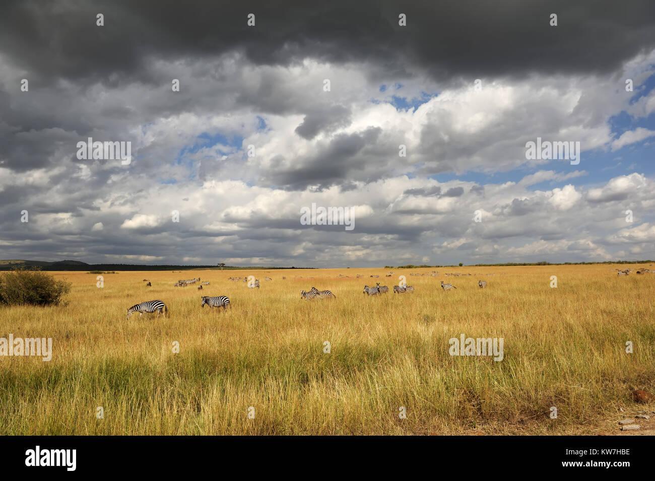 Paysage de savane dans le parc national du Kenya, Afrique Photo Stock