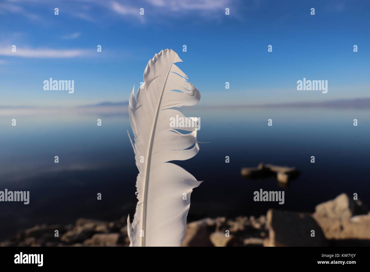 Une plume d'oiseau blanc endommagé a tenu jusqu'en face de la Salton Sea en Californie, symbolisant Photo Stock