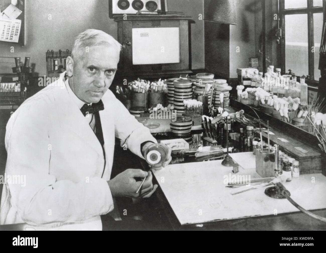 Le Dr Alexander Fleming, (1903-1972), biologiste écossais qui a découvert la pénicilline antibiotique Photo Stock