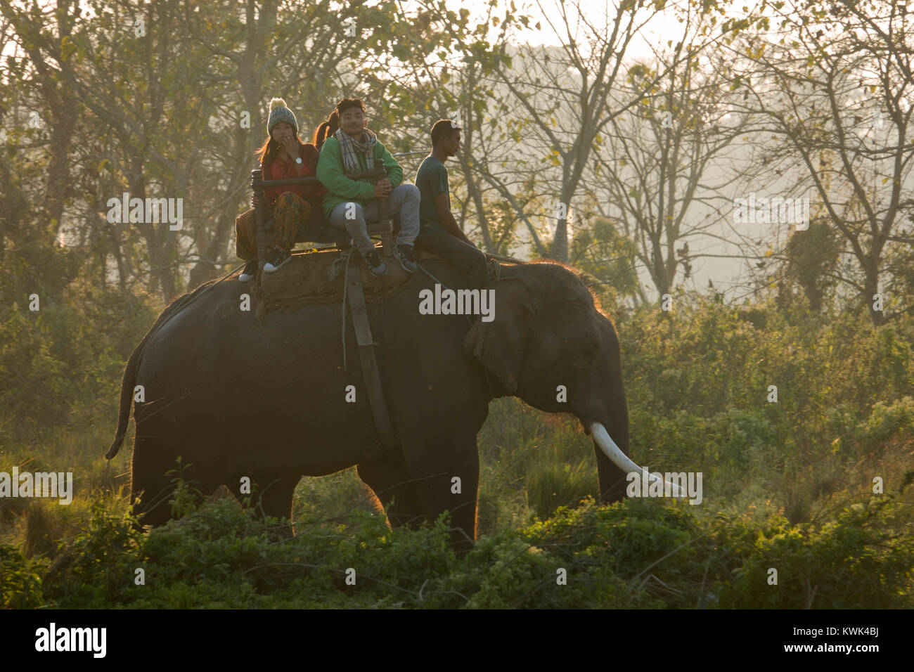 Les touristes sur elephant jungle safari dans le parc national de Chitwan, au Népal Photo Stock