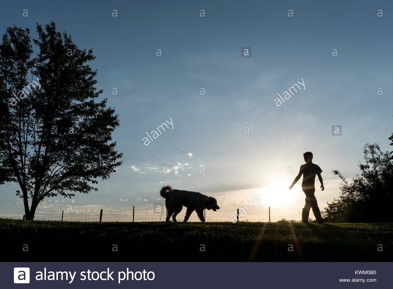 Silhouette boy playing with dog sur terrain contre le ciel au coucher du soleil Photo Stock