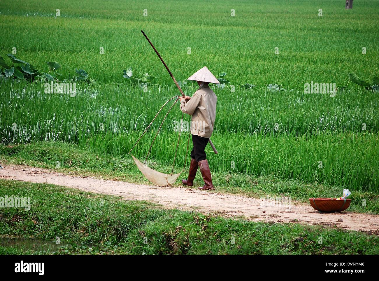 (FIN) légionnaire en Indochine par BONO La-chasse-a-lhomme-grenouille-riziere-vietnam-il-porte-un-chapeau-vietnamien-typique-kwnym8