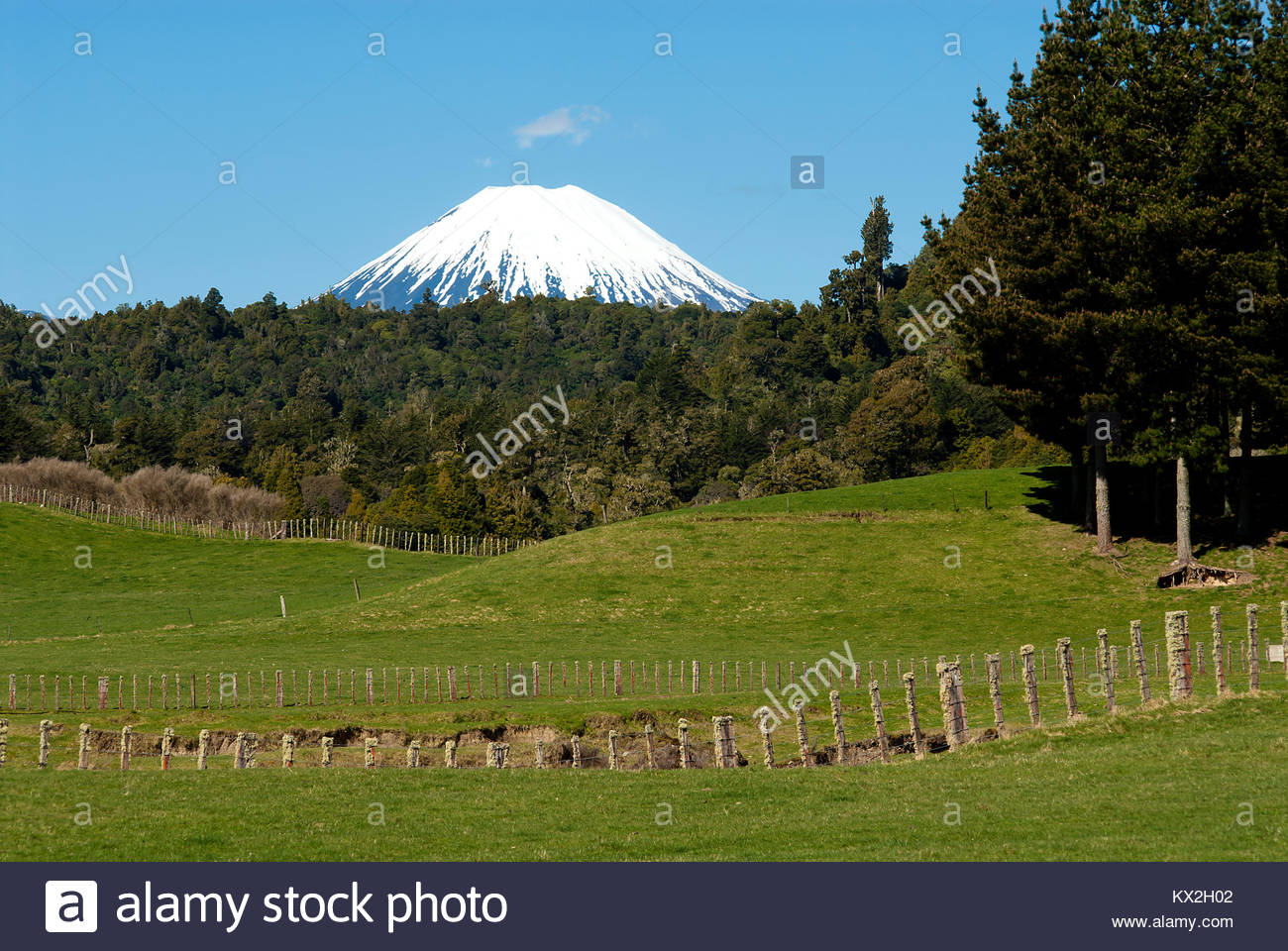 nouvelle z lande paysage avec mt ngauruhoe volcan dans la. Black Bedroom Furniture Sets. Home Design Ideas