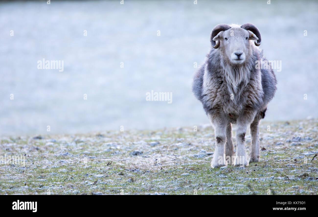 Flintshire, Pays de Galles, Royaume-Uni. 8 janvier, 2018. Météo France: Une autre nuit claire pour Photo Stock