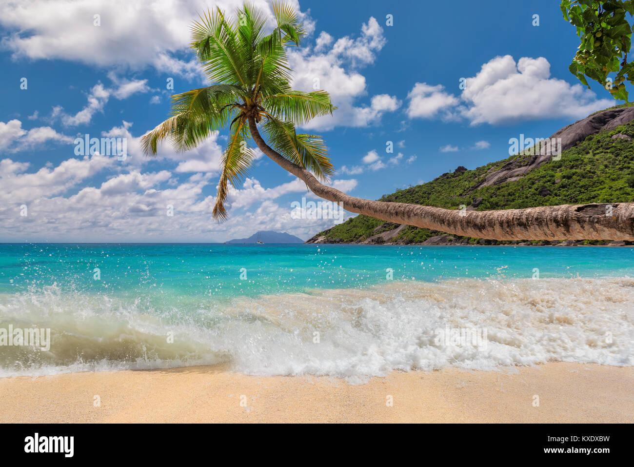 Palmier sur la plage tropicale aux Seychelles, l'île de Mahé. Photo Stock