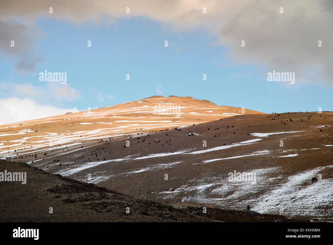 Paysage de montagnes enneigées de Mongolie hiver neige nuageux troupeau Mongolie Photo Stock