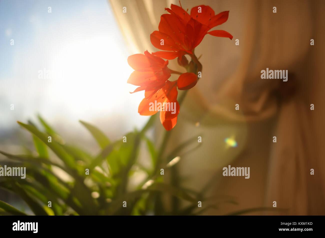 Une fleur du matin Photo Stock