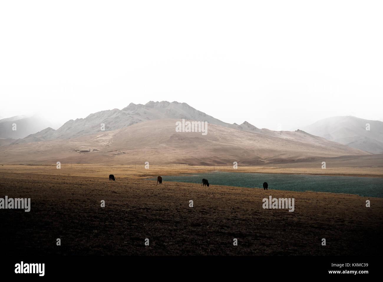 La Mongolie lac hiver montagnes de neige nuageux le bétail de pâturage des vaches steppes mongoles de Photo Stock
