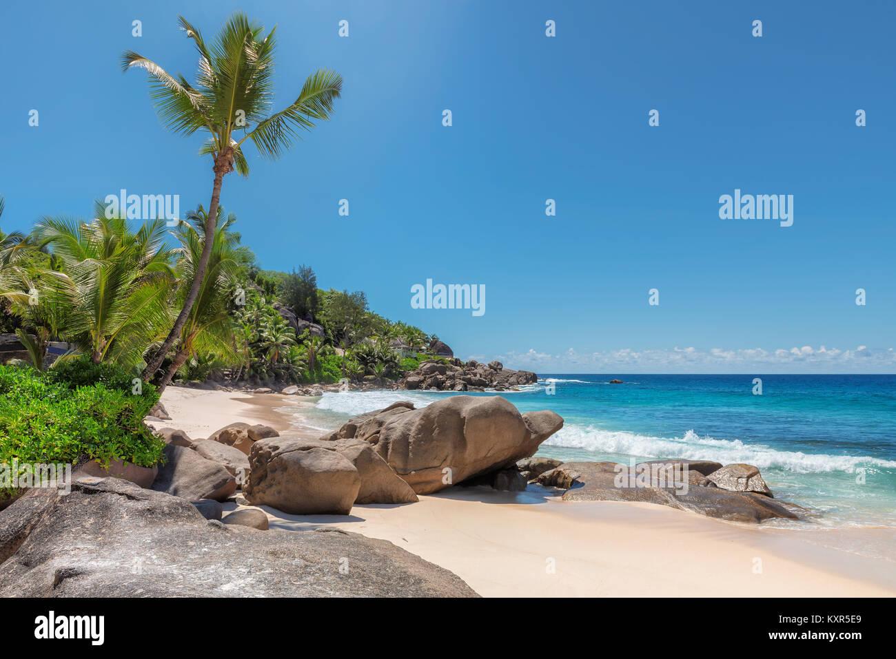 Seychelles plage avec palmiers et de belles pierres. Photo Stock