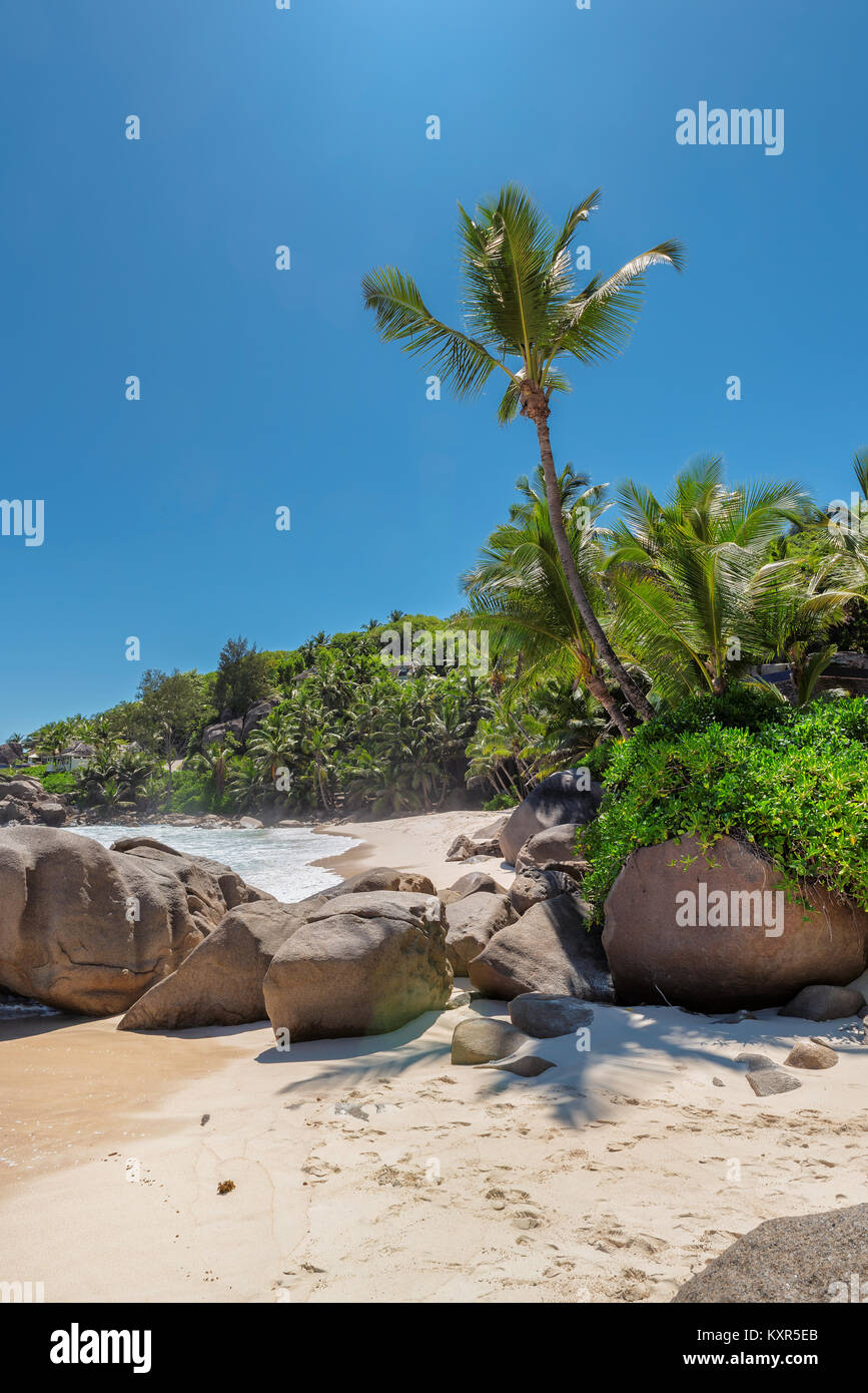 Palmiers sur la plage tropical exotique. Photo Stock