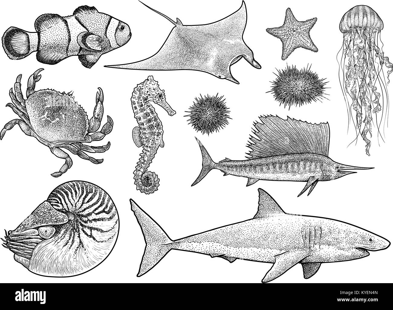 Collection d 39 animaux marins illustration dessin gravure encre dessin au trait vector - Dessin d animaux marins ...