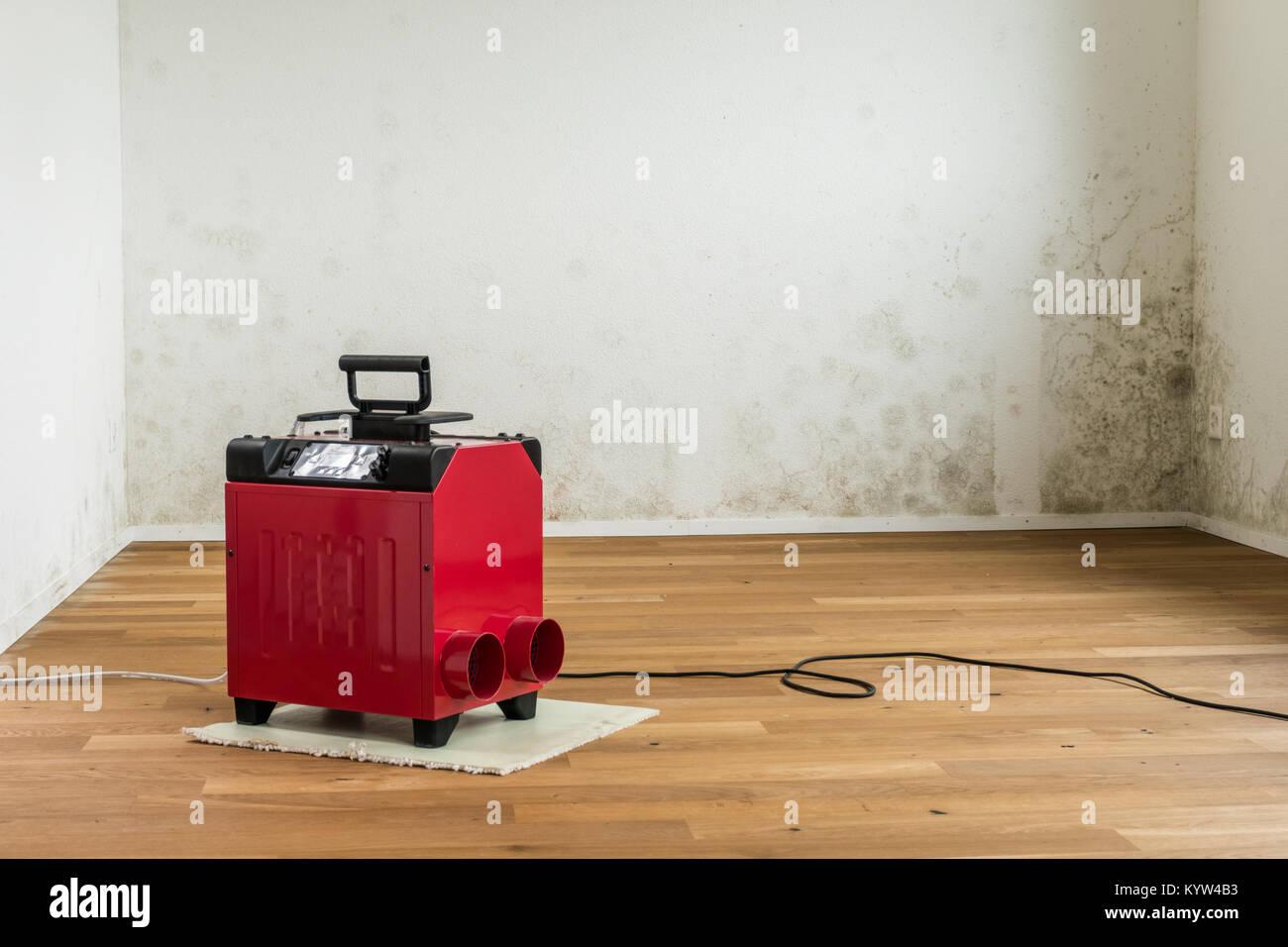 mold spots photos mold spots images alamy. Black Bedroom Furniture Sets. Home Design Ideas