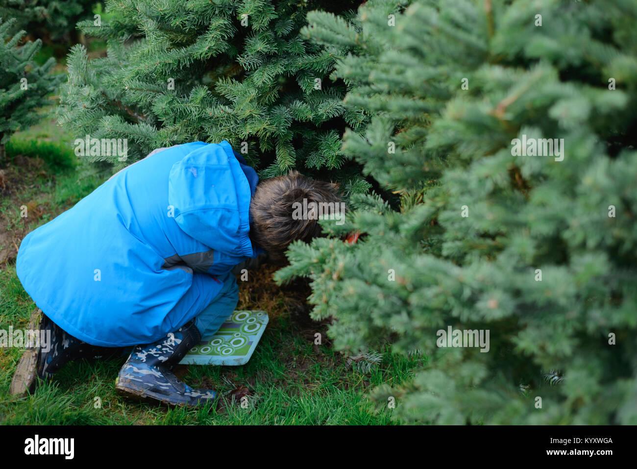 Toute la longueur du garçon par les arbres de Noël à la ferme Photo Stock
