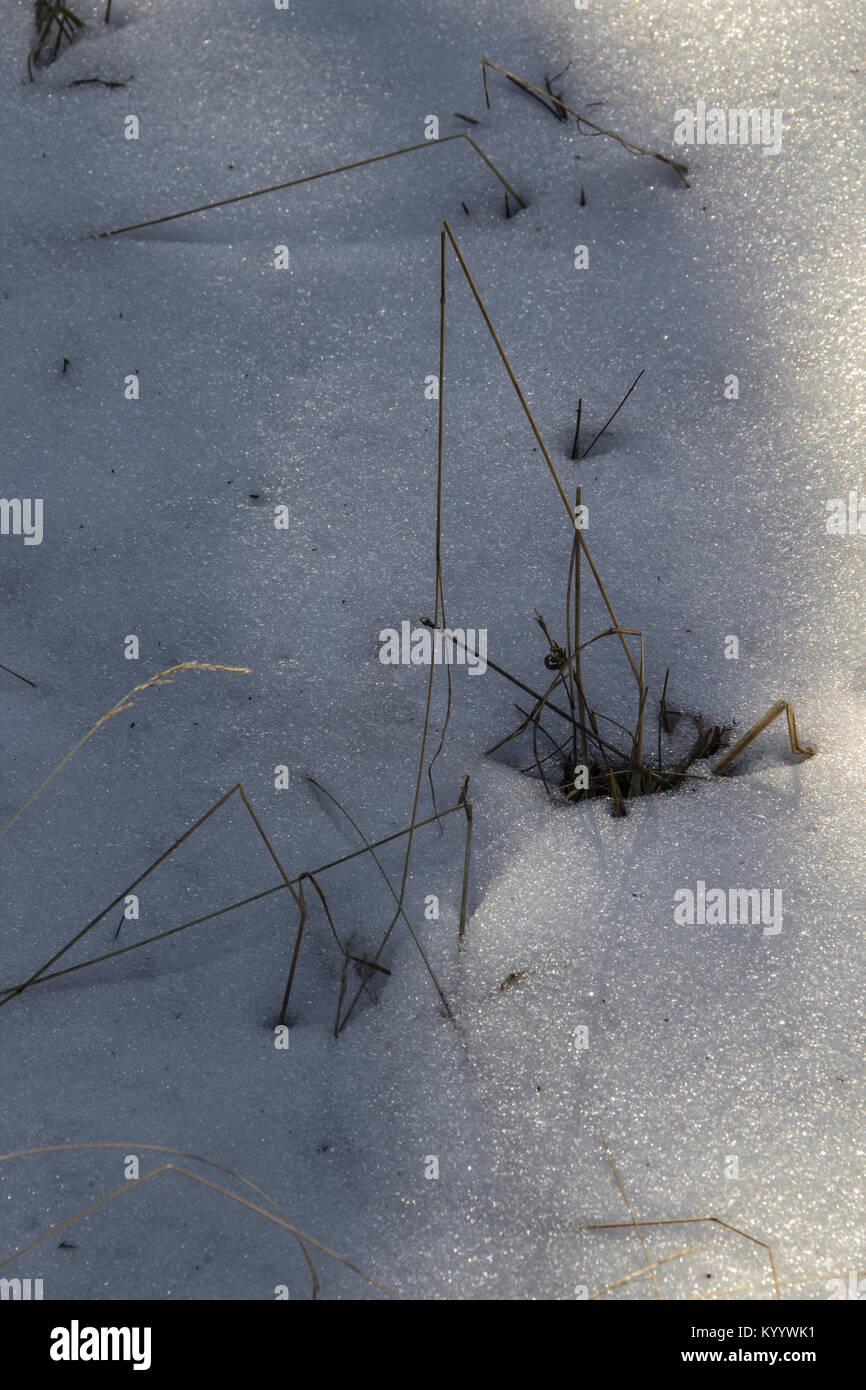 Brins d'herbe dans la neige Banque D'Images