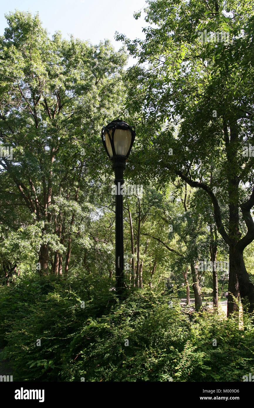 Lampadaire Parmi Des Buissons Dans Central Park Le Quartier De