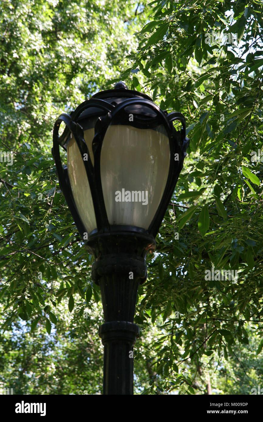 Haut De Lampadaire Parmi Des Buissons Dans Central Park Le Quartier