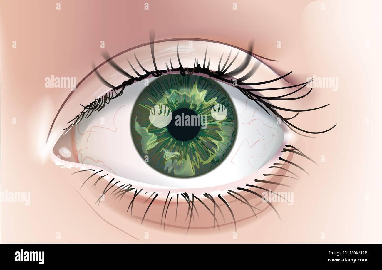 Un Dessin Réaliste D Un œil Humain Avec Un Iris Vert Close