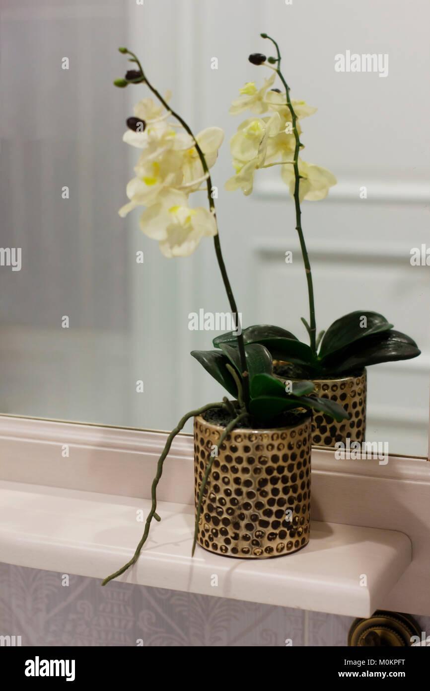 Meuble Salle De Bain Acheter ~ orchid e fleur d int rieur dans le pot sur l tag re dans la salle