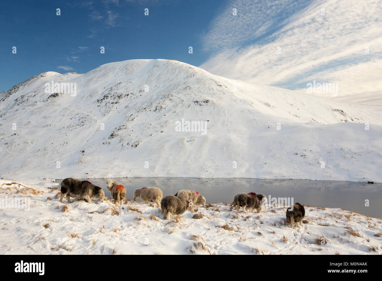 À l'échelle Grisedale Tarn à Fairfield dans le Lake District, UK avec moutons Herdwick au premier Photo Stock