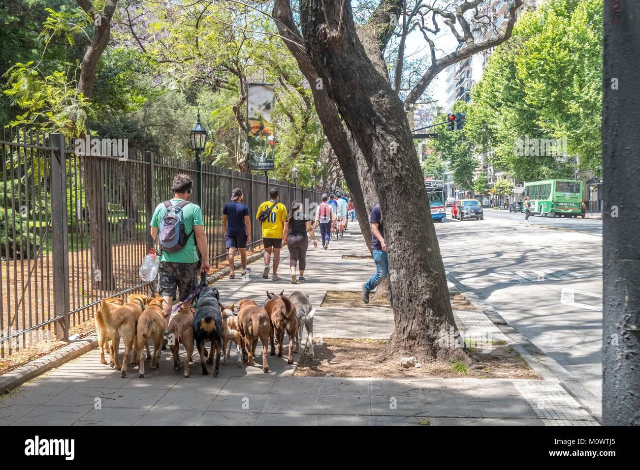 Argentine, province de Buenos Aires, Buenos Aires,dog walker Photo Stock