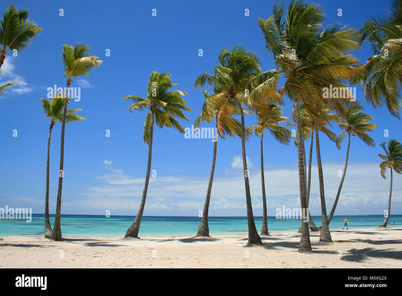 Plage des Caraïbes plein de palmiers à Cap Cana, République Dominicaine Photo Stock