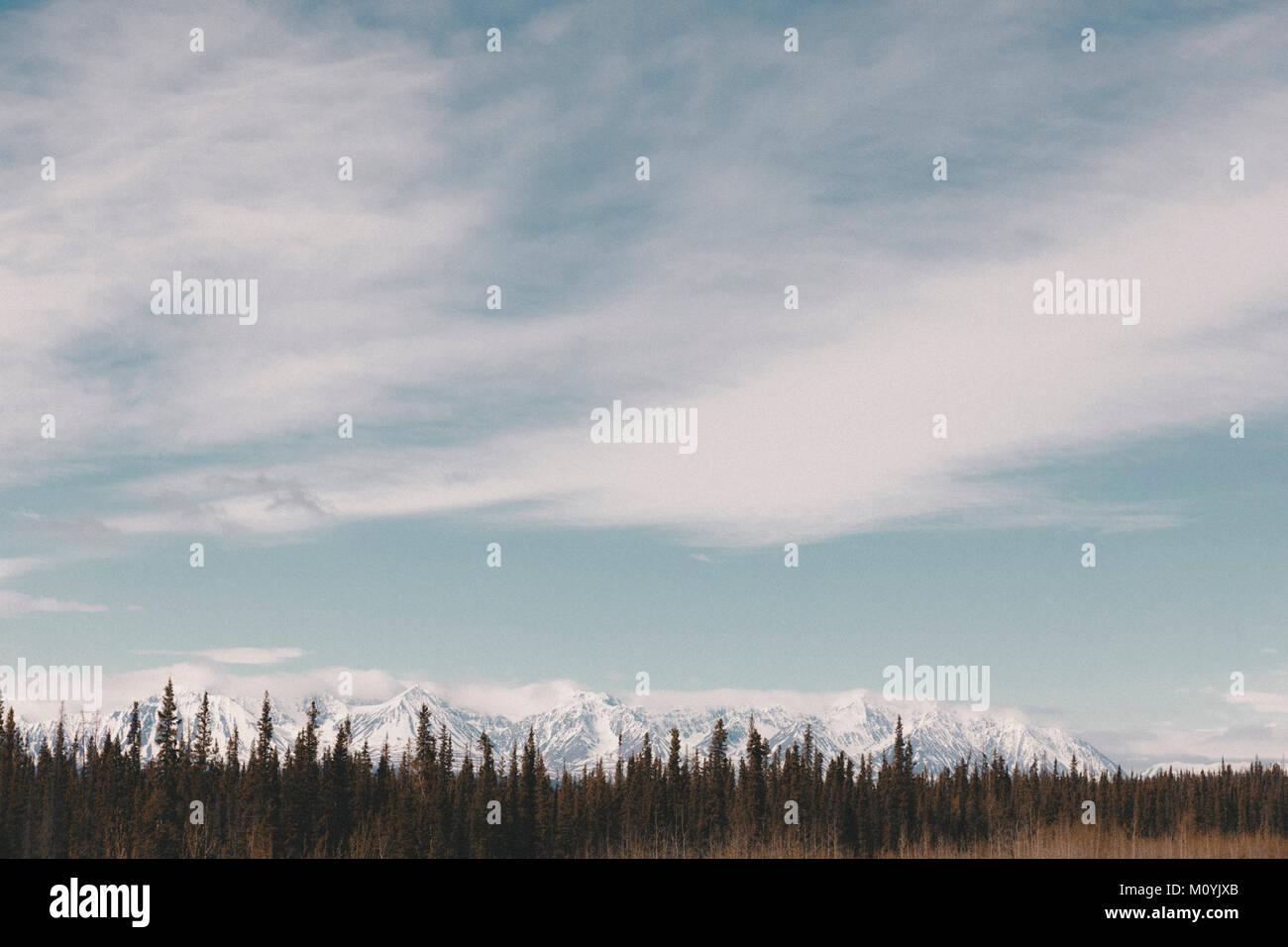 Les arbres à proximité de snowy mountain range Banque D'Images