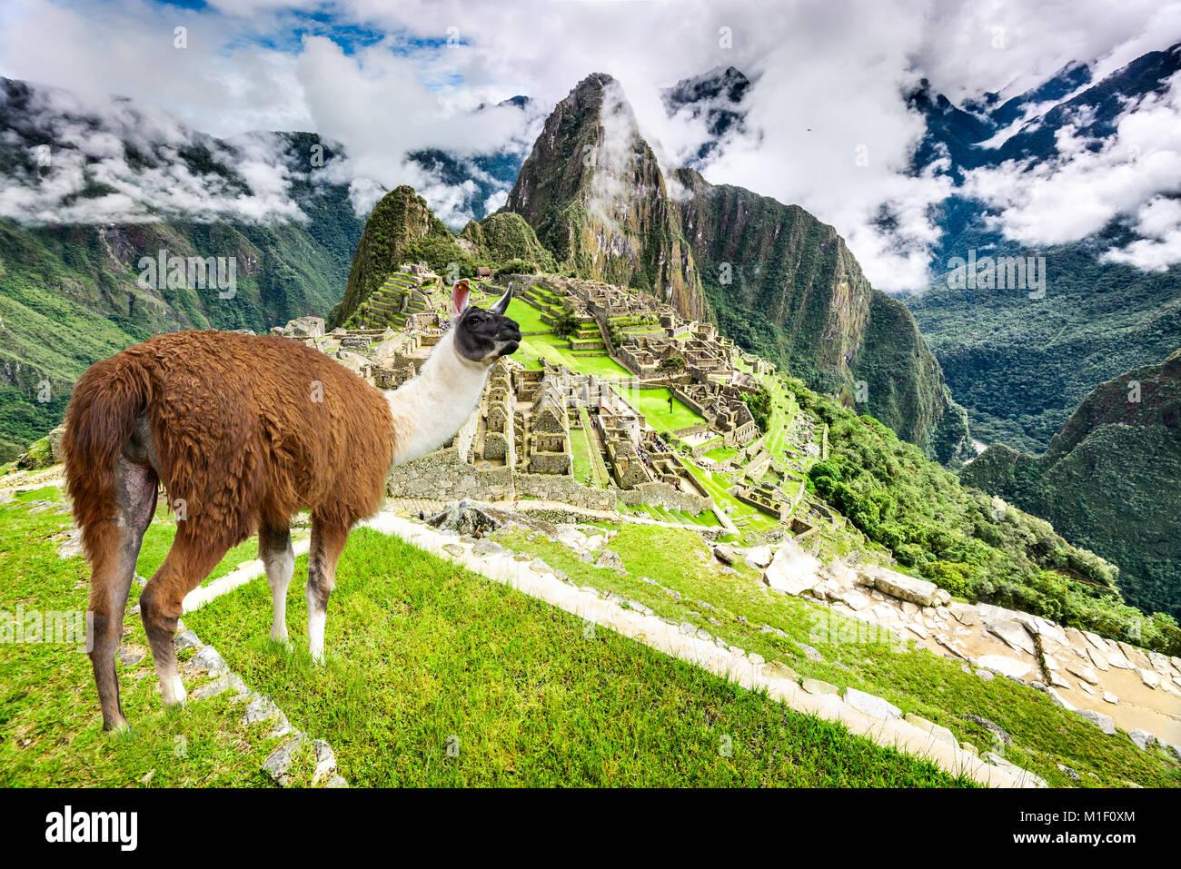 Machu Picchu, Cusco, Pérou - Empire Inca, ville et montagne Huaynapicchu, Vallée Sacrée. Amazing Photo Stock