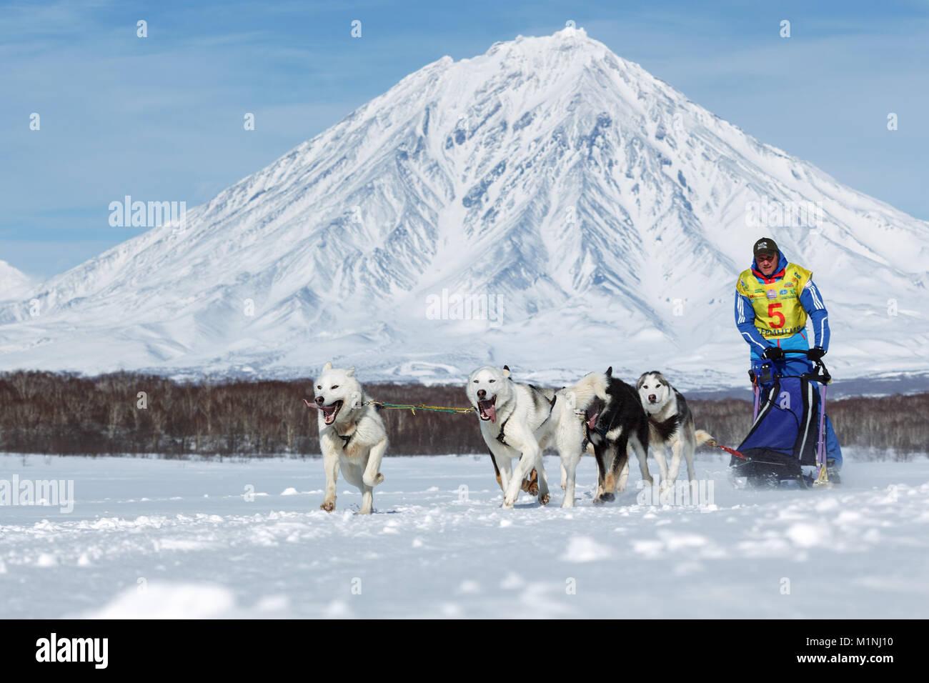 L'exécution de l'équipe de chiens de traîneau musher Ryabuhin Denis sur fond de Volcan Koryak. La péninsule du Kamtchatka Banque D'Images