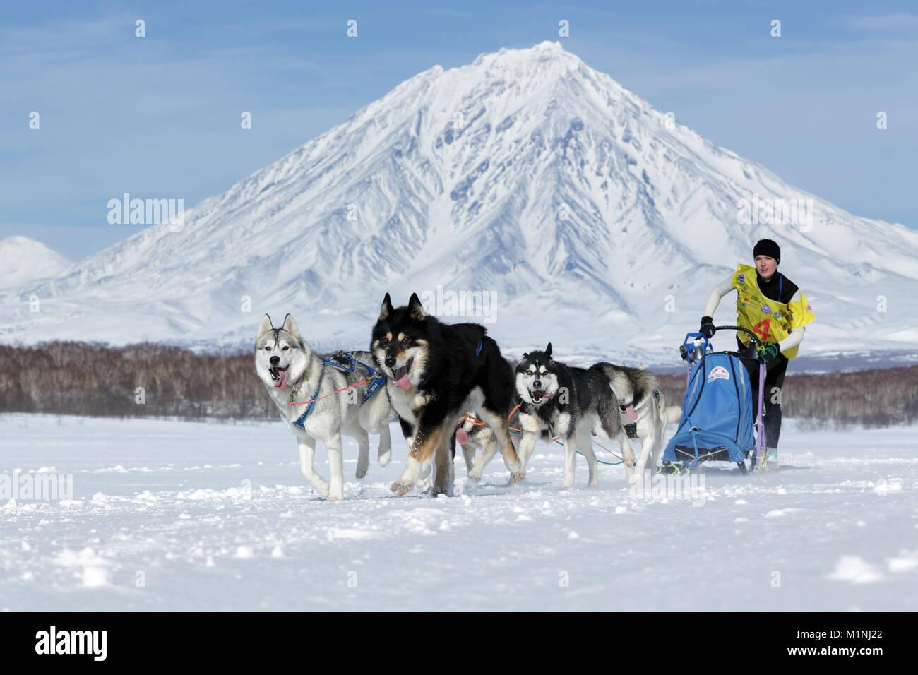 L'exécution de l'équipe de chiens de traîneau musher Yulya Kamchatka Chiruhina sur fond de volcan. Fédération de Banque D'Images