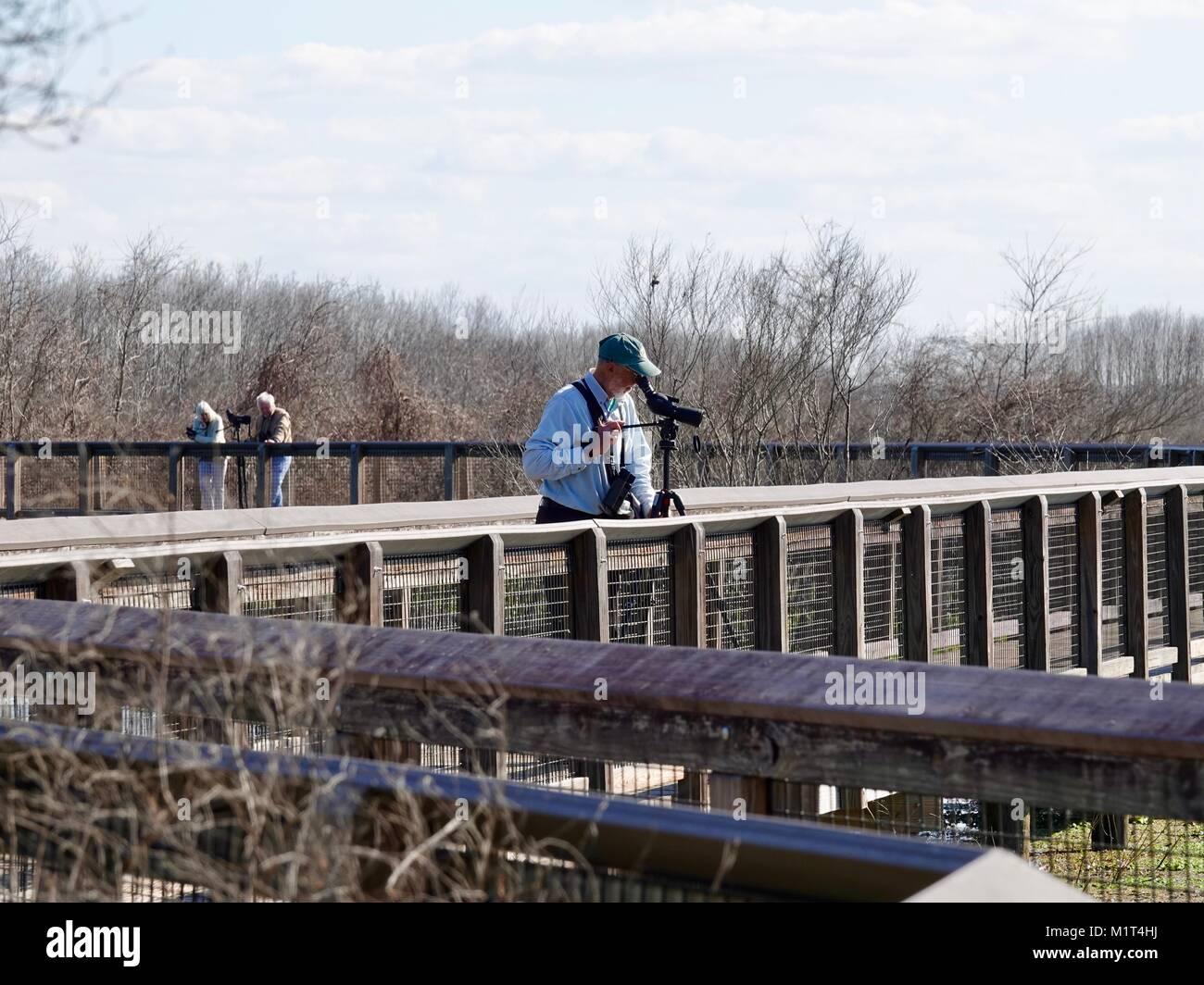 Trois retraités sur la promenade d'observation des oiseaux; l'hiver à Paynes Prairie Preserve Photo Stock