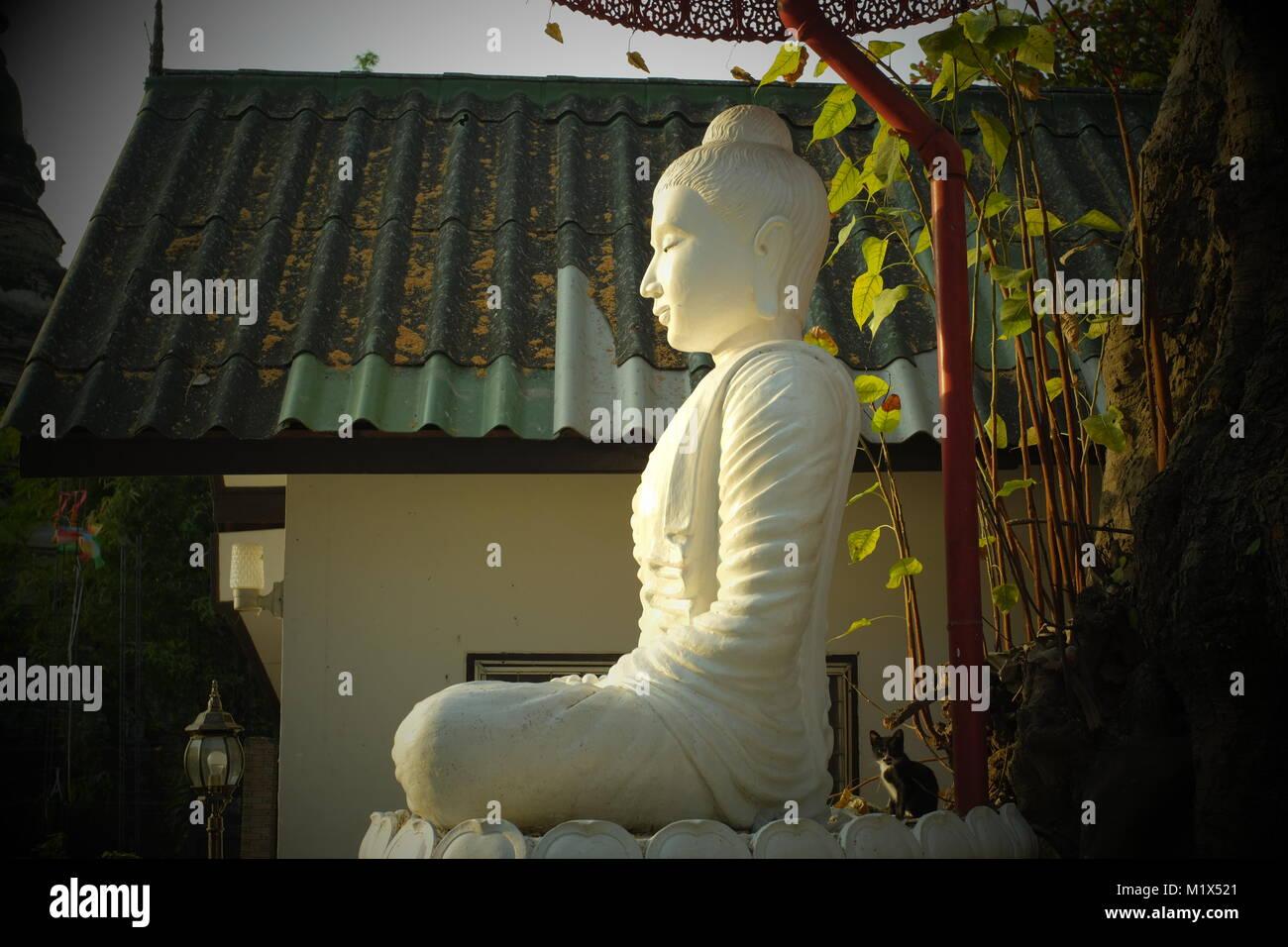 Une statue de Bouddha sous un grand arbre dans un temple à Chiang Mai, Thaïlande. Photo Stock