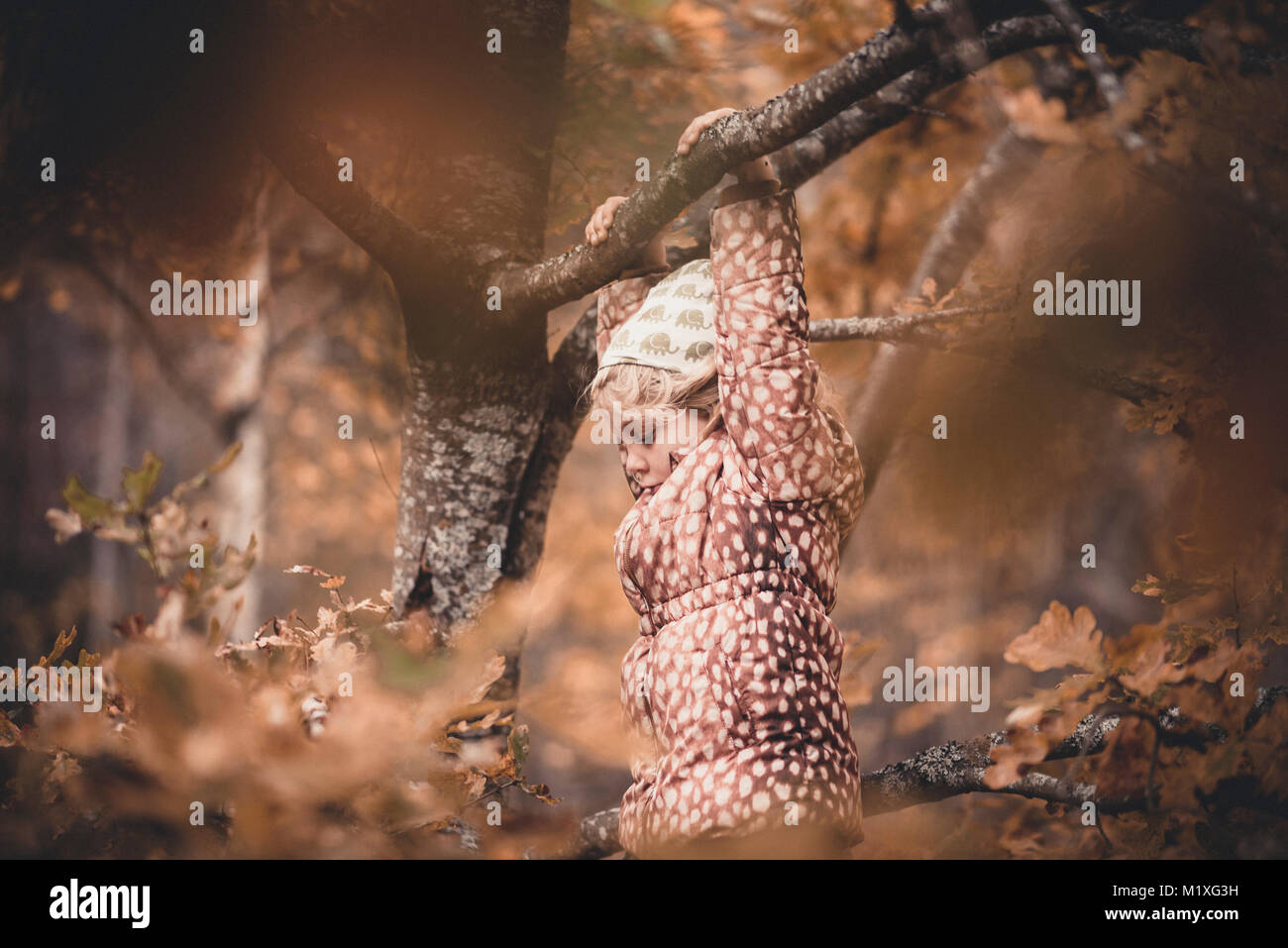 Girl hanging from tree branch in Sodermanland, Suède Photo Stock