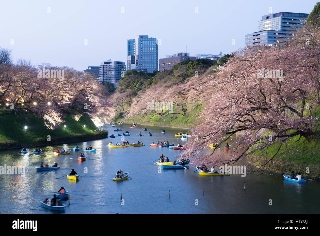 Vue de nuit avec fleurs de cerisier massif de la ville de Tokyo comme arrière-plan. Photoed à Chidorigafuchi, Photo Stock
