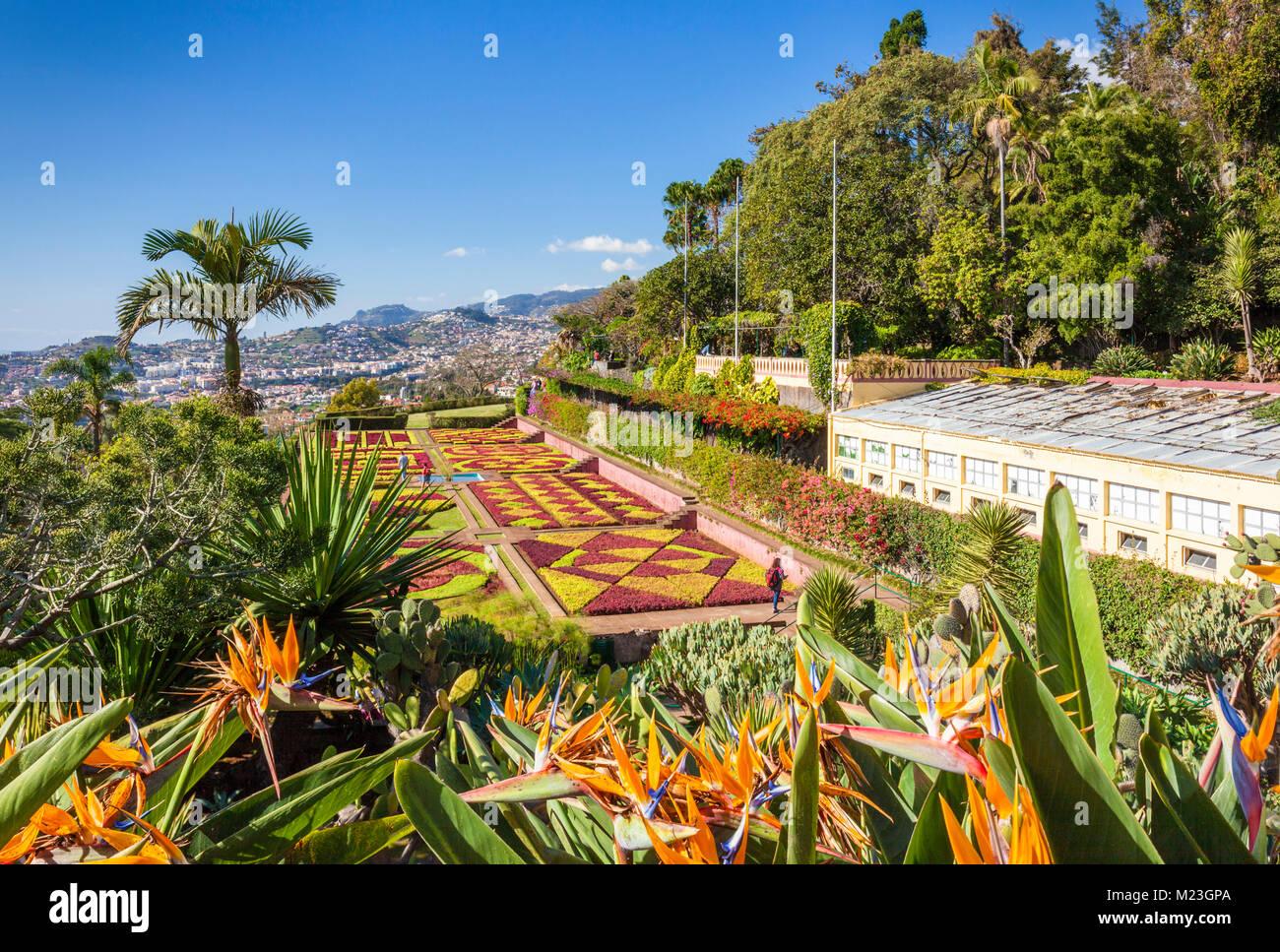 Jardin botanique de Madère Funchal Jardins botanique Jardim Botanico au-dessus de la capitale de Funchal, Madeira, Photo Stock