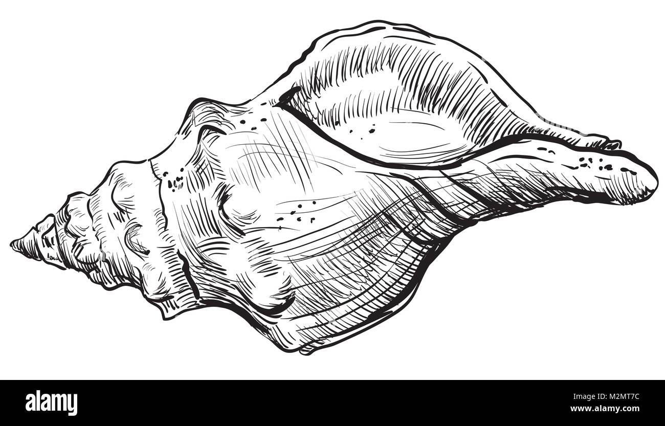 Dessin A La Main Coquillage Vector Illustration Monochrome De Coquillage En Spirale Isole Sur Fond Blanc Image Vectorielle Stock Alamy