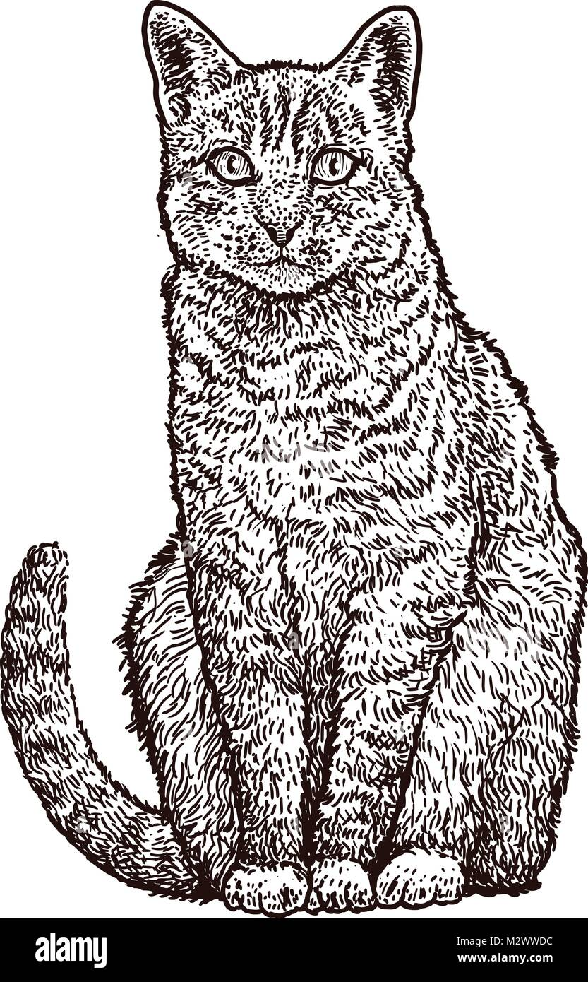 Illustration Chat Assis Dessin Gravure Encre Dessin Au Trait