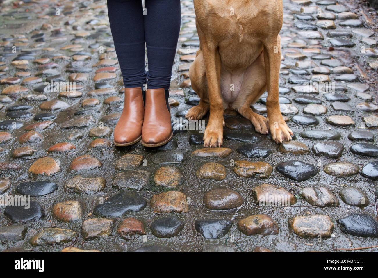 Une partie inférieure d'un point de vue mode femme en bottes marron avec son animal de compagnie Labrador Photo Stock