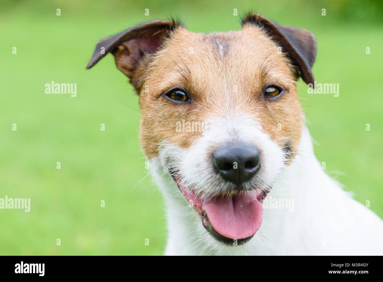 Portrait de chien heureux et satisfait avec vue Photo Stock